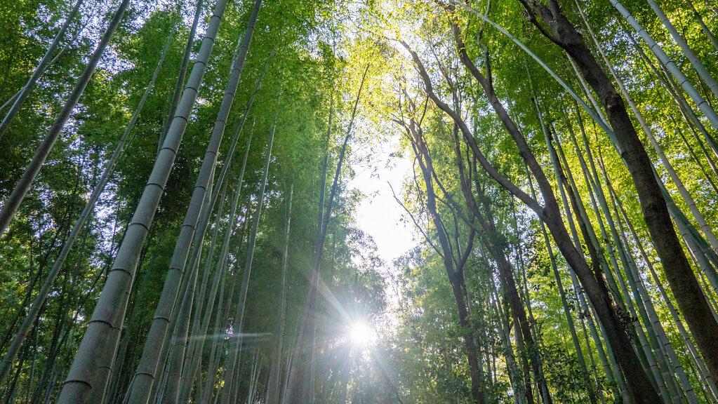 Kyoto4-101.jpg